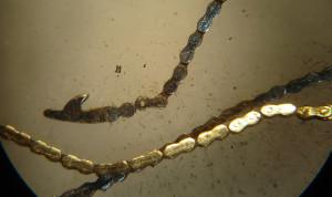 catena conoide1